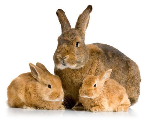 Vakcinace králíků