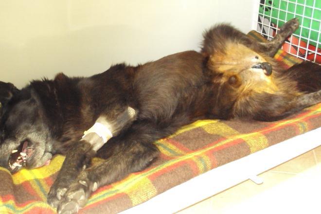 Hospitalizace po kastraci psa