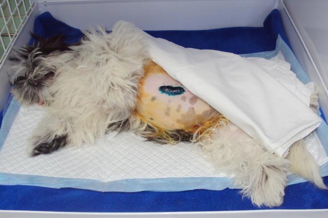 Hospitalizace po operaci pupeční kýly