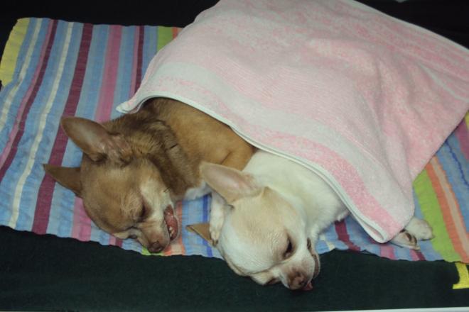 Hospitalizace psů po odstranění zubního kamene ultrazvukem