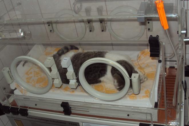 Hospitalizace pacientů