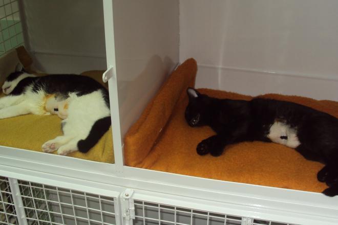 Hospitalizace po kastraci kočky