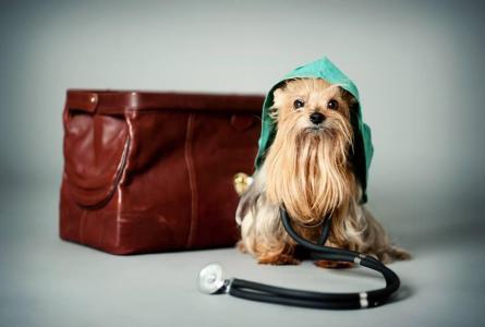 Veterinary emergency - Veterina Pelhřimov
