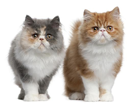 Vaccinations of cats
