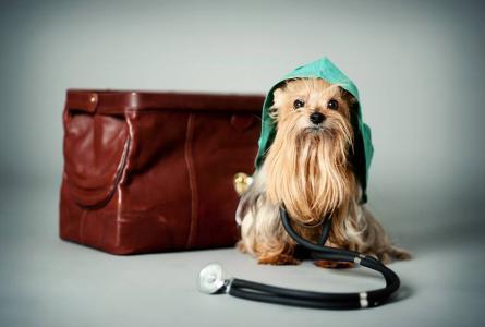 Veterinární pohotovost | MVDr. Petra Souchová